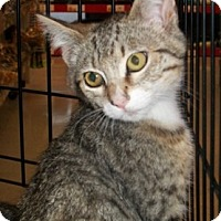 Adopt A Pet :: Scarlett - Castro Valley, CA