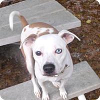 Adopt A Pet :: Roni - Muskegon, MI