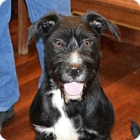 Adopt A Pet :: Bert - Schaumburg, IL