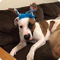 Adopt A Pet :: Tank - Harrisburg, NC