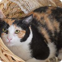 Adopt A Pet :: Cabernet & Figet - Bristol, CT