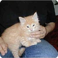Adopt A Pet :: Samwise - Proctor, MN