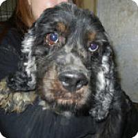 Adopt A Pet :: Captain - Antioch, IL