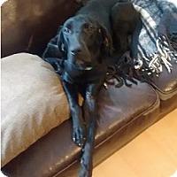 Adopt A Pet :: Lexi - Hamilton, ON
