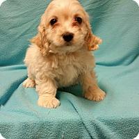 Adopt A Pet :: Barrington - Hazard, KY