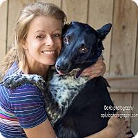 Adopt A Pet :: ADOPTION PENDING-Bindy - Woodland Hills, CA