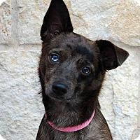 Adopt A Pet :: Rascal - Weatherford, TX