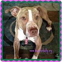 Adopt A Pet :: Zoe - Clinton, MS