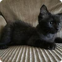 Adopt A Pet :: Ollie - Riverside, RI