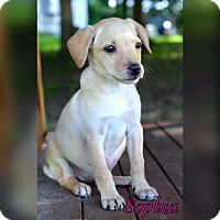 Adopt A Pet :: Sophia - Bradenton, FL