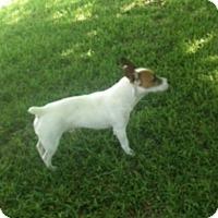 Adopt A Pet :: Atkins in Austin - San Antonio, TX