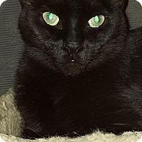 Adopt A Pet :: Austin - Sunderland, ON