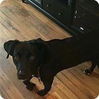 Adopt A Pet :: Jack Daniels - Nashville, TN