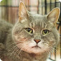 Adopt A Pet :: Jake - Great Falls, MT
