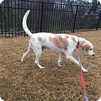 Adopt A Pet :: Charlie - Youngsville, NC