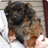 Adopt A Pet :: Chewie - Salem, OR