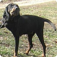 Adopt A Pet :: Tilly - Hillsboro, OH