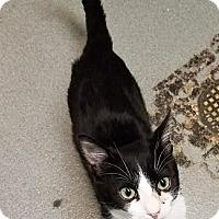 Adopt A Pet :: Tundra - Westminster, CA