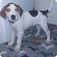 Adopt A Pet :: Mason - Burgaw, NC
