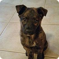 Adopt A Pet :: Whoopi - oklahoma city, OK