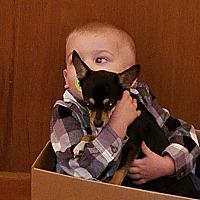 Adopt A Pet :: Coco - Cumbeland, MD