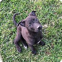 Adopt A Pet :: Madison - Sagaponack, NY