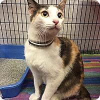 Adopt A Pet :: Stella - Oakland, CA