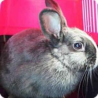 Adopt A Pet :: PARIS - Brooklyn, NY