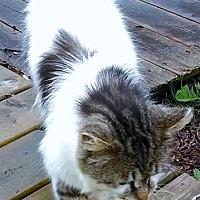 Adopt A Pet :: Bandit - Caro, MI