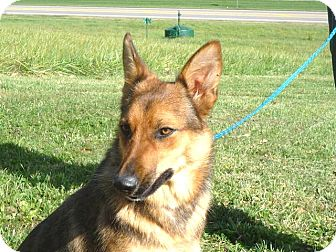 Shepherd (Unknown Type) Mix Dog for adoption in Zanesville, Ohio - # 416-12 ADOPTED!