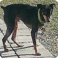 Adopt A Pet :: Jack - Columbus, OH