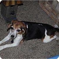 Adopt A Pet :: Athena - Indianapolis, IN