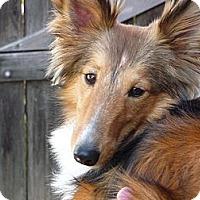 Adopt A Pet :: Sweetie - San Diego, CA