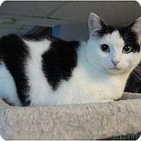 Adopt A Pet :: Rizzo - Sterling Hgts, MI