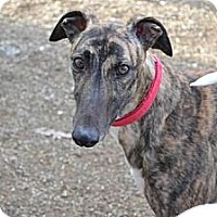 Adopt A Pet :: Maddie (Memories Made) - Chagrin Falls, OH