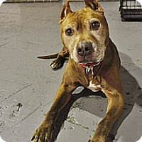 Adopt A Pet :: COURTESY POST: Savannah - Chicago, IL