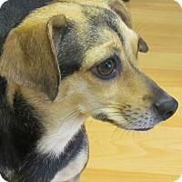 Adopt A Pet :: Faith - Chesterfield, VA