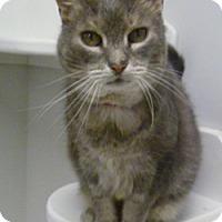 Adopt A Pet :: Lady Jay - Hamburg, NY