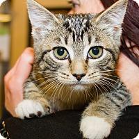 Adopt A Pet :: Violet - Irvine, CA