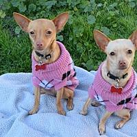 Adopt A Pet :: Anna & Elsa - El Segundo, CA