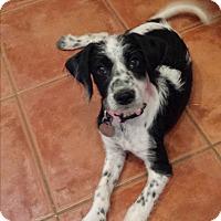 Adopt A Pet :: Mariah - Scottsdale, AZ
