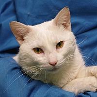Adopt A Pet :: Caspian - Olean, NY