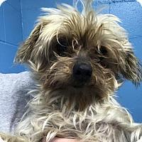 Adopt A Pet :: Wendy - Raytown, MO