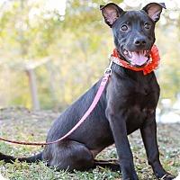 Adopt A Pet :: Neeki - Castro Valley, CA
