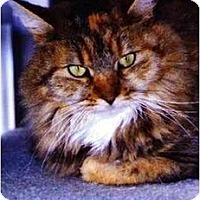 Adopt A Pet :: Amy - Medway, MA