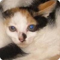 Adopt A Pet :: Pinata - Dallas, TX