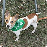 Adopt A Pet :: Sprite - Duluth, GA