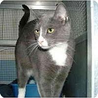 Adopt A Pet :: Aurora - Winter Haven, FL