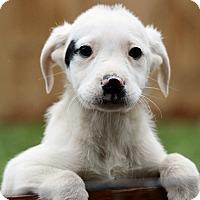 Adopt A Pet :: Elise - Brattleboro, VT