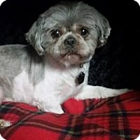 Adopt A Pet :: Junior Clark - Urbana, OH